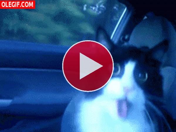 GIF: Este gato se ha vuelto loco por viajar en coche