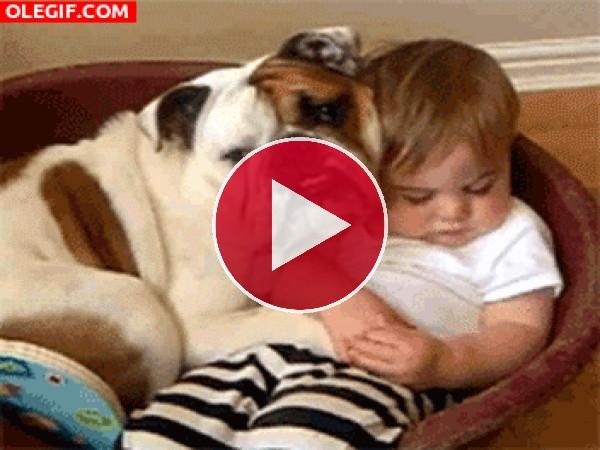 Bulldog protegiendo al bebé dormido