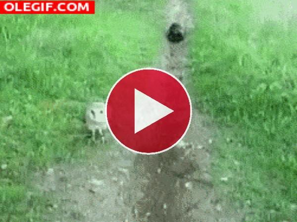 GIF: Los juegos de un gato y una lechuza