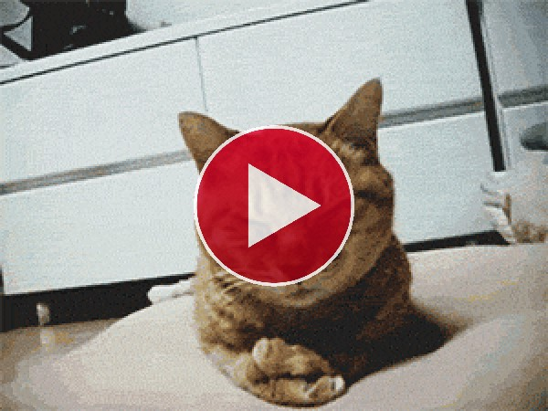 GIF: A este gato le pica la nariz mientras duerme