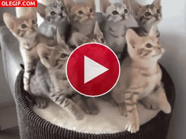 GIF: ¿Qué miran estos gatitos?