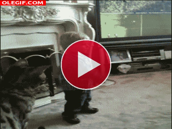 GIF: Mira cómo este niño es derribado por un gato
