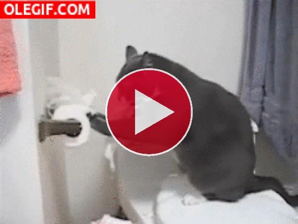 GIF: Los gatos odian el papel higiénico