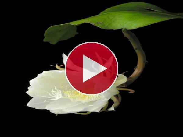 Una hermosa flor moviendo sus pétalos