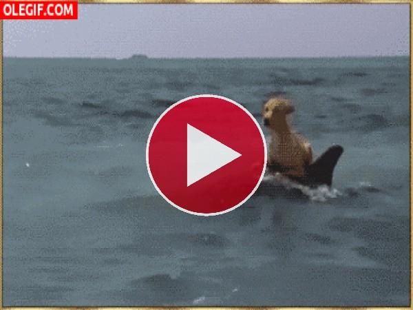 Mirad a este perro nadando sobre un delfín