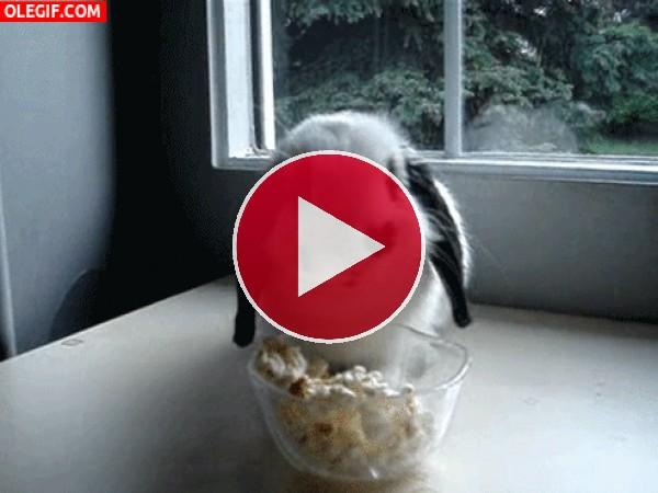 Un conejo comiendo palomitas