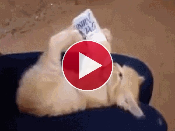 GIF: Qué bien se toma este gato el biberón