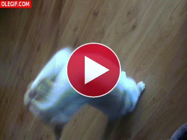 GIF: Este gato se vuelve loco con su juguete