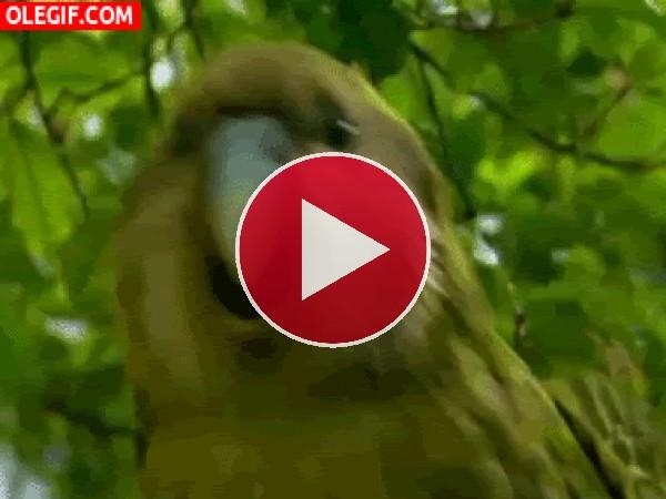 GIF: Menuda marcha tiene este pájaro