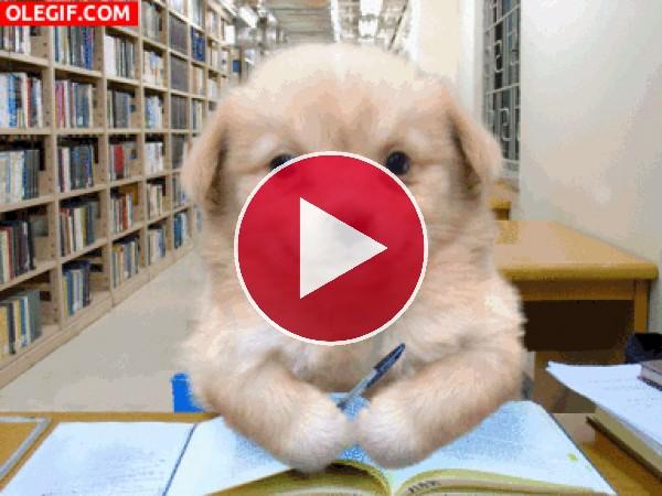 Un simpático perro estudiando