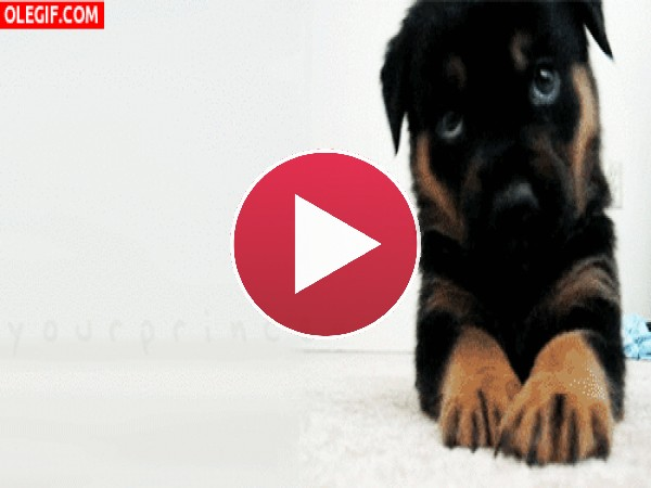 Este cachorro te quiere dar un mordisquito