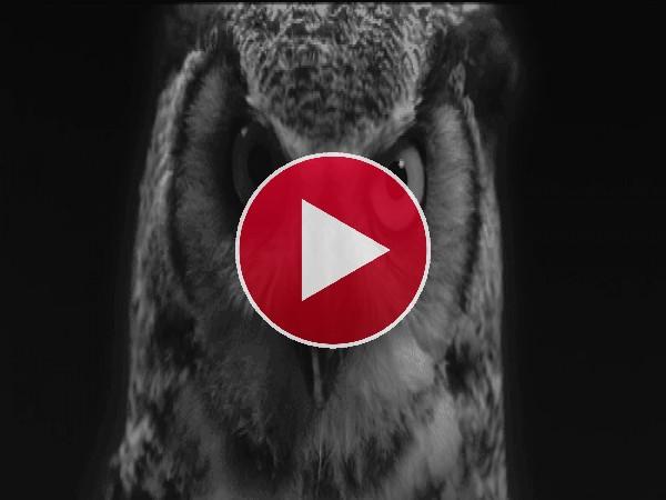 GIF: Un búho muy serio