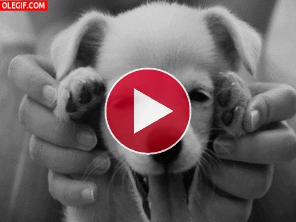 GIF: Un cachorro divertido