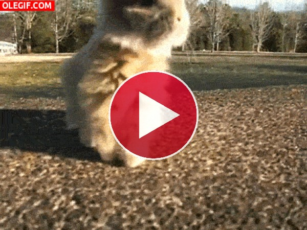 Este conejito es todo un bailarín