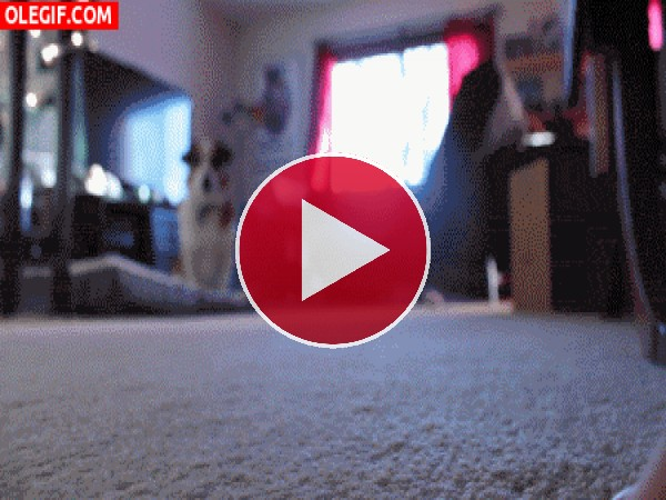 GIF: Un perro muy obediente