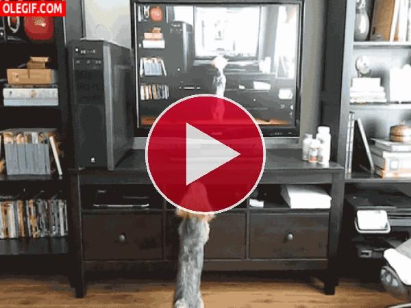 A este perrito le gusta saltar frente a la tele