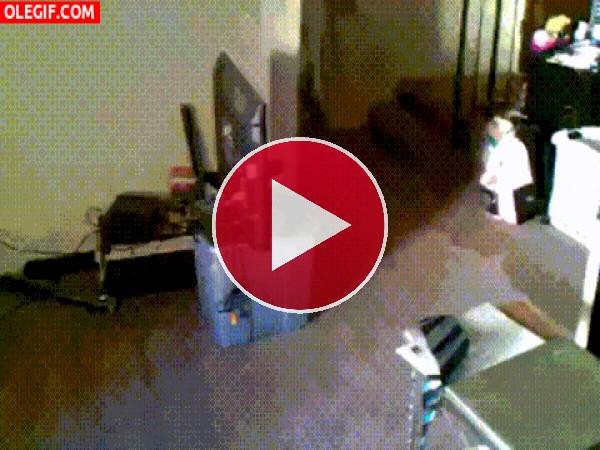 Este perro cae a plomo tras una carrera veloz