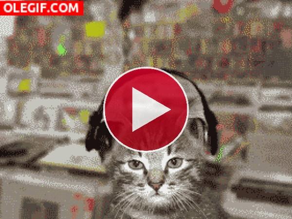 A este gato le encanta escuchar música