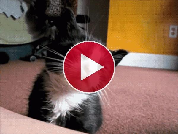 GIF: Este gatito tiene mucho sueño