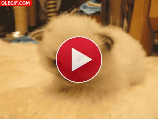 GIF: A este gatito le está entrando mucho sueño
