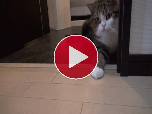 GIF: Un gato con ganas de jugar