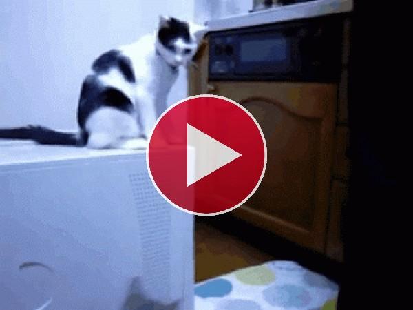 GIF: Gato provocando una pelea gatuna