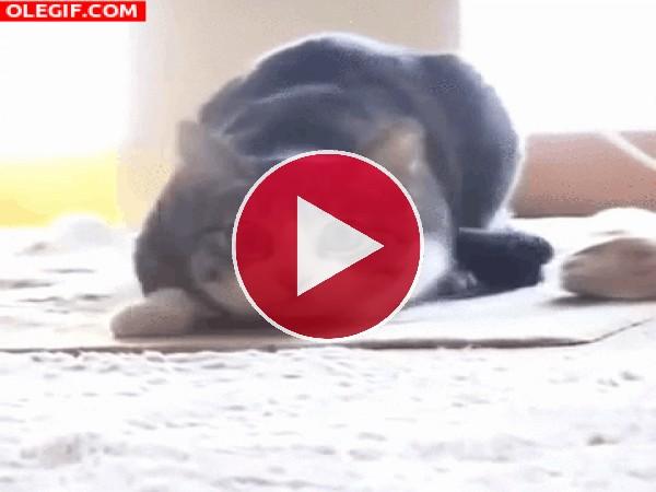 GIF: A este gato le gusta bailar el twist