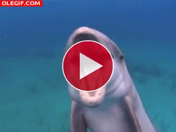 Un delfín cantando bajo el agua