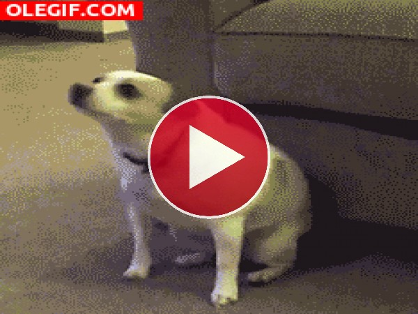 GIF: Qué bien menea el cucu este perro