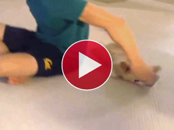 GIF: Utilizando al perro de mopa