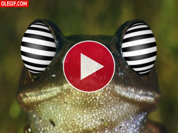 GIF: Una rana alucinógena
