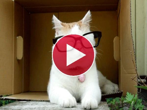 GIF: Un gato muy sofisticado