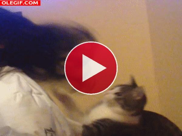 Un gato peluquero