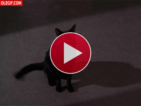 Un gato negro cabreado