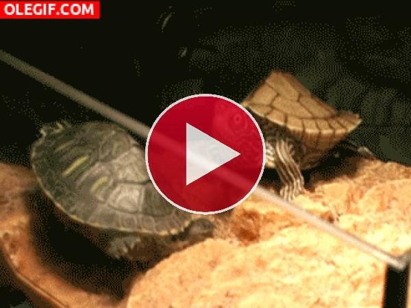 Mira la cara de sorpresa que pone esta tortuga