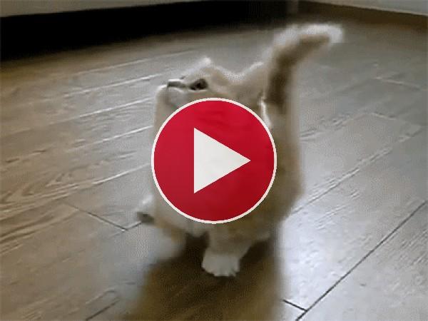 Este gatito no para de bailar