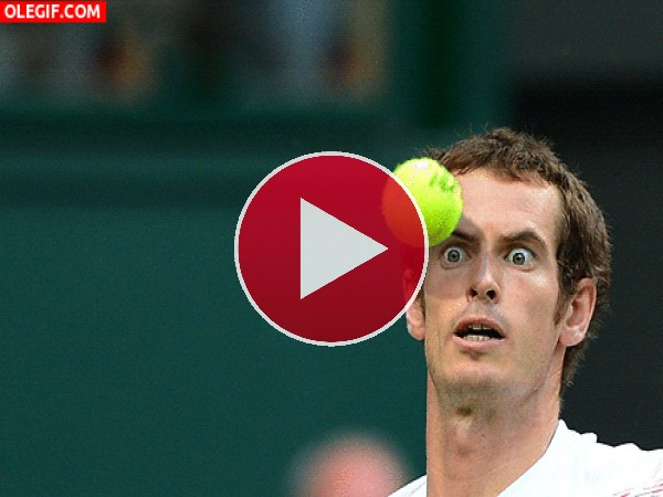 La cara de Andy Murray antes del pelotazo