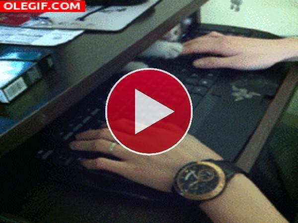 GIF: A este gatito le encanta jugar tras el teclado