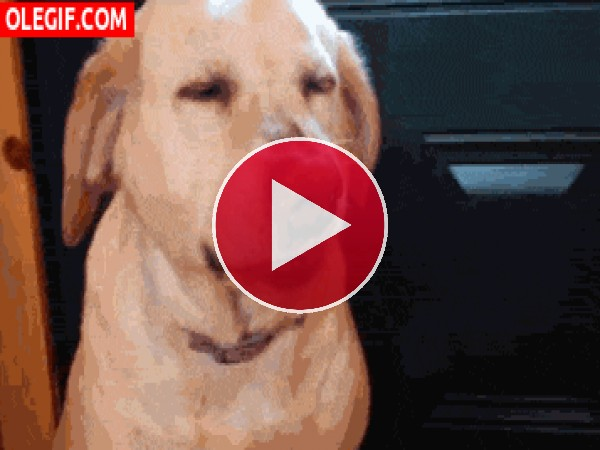 ¿Qué le pasa a este perro?
