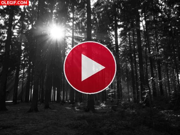 GIF: El brillo del sol filtrándose en el bosque