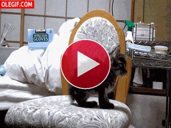 GIF: Parece que este gatito es un poco gruñón