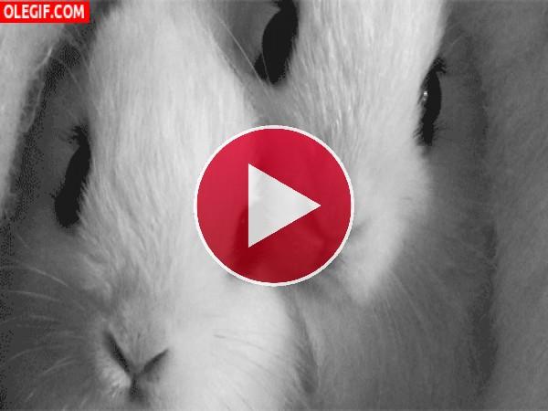 GIF: ¿No os parecen lindos estos conejitos?