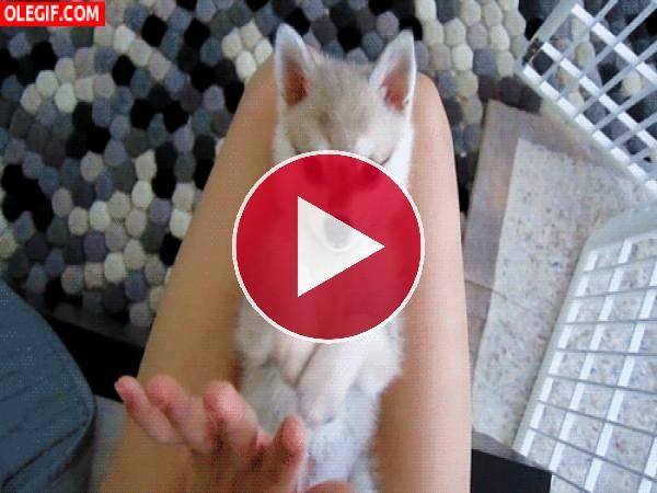 GIF: Mirad a este cachorro lo bien que choca la mano