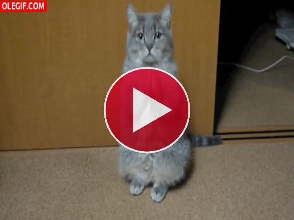 GIF: Por favor soy un gato hambriento