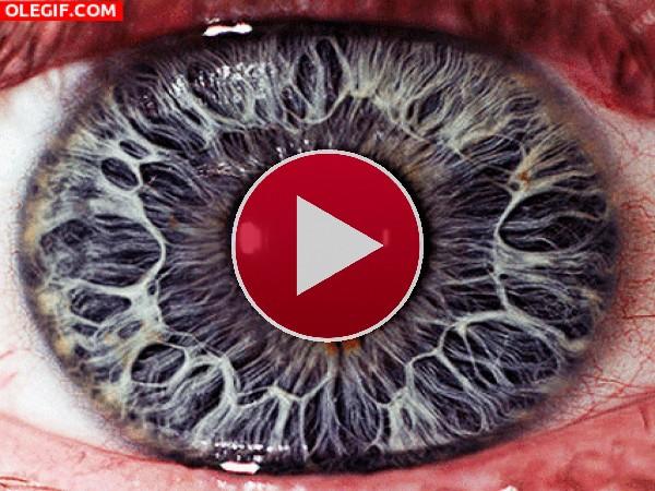 GIF: Ojos en movimiento