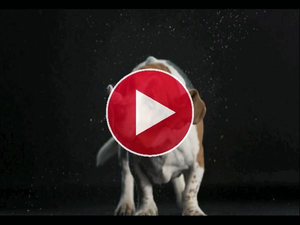 GIF: Este perro da un podo de miedo cuando se sacude