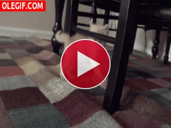 Cómo le gusta jugar a este gatito