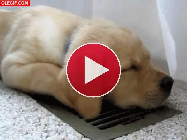 GIF: Lo que hace un perro en verano para refrescarse