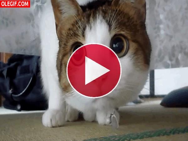 GIF: ¿Qué mira este gato con tanta atención?