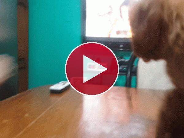 GIF: A este perro no le gusta que lo peinen